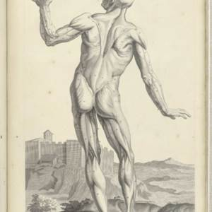 Appendix, Table 2: Male anatomical Figure showing Musculature